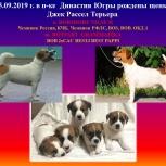 Джек Рассел Терьер, Барнаул