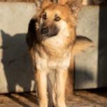 Потерялся пёс Портос!, Барнаул