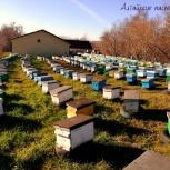 Алтайский мёд разных сортов от семейного пчелохоз-ва, Барнаул