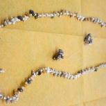 Набор украшений (бусы браслет, сережки) из ракушек и жемчуга, Барнаул